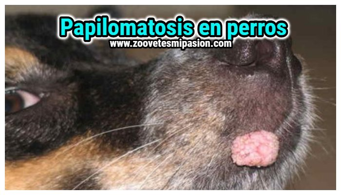 warts on hands and cervical cancer virus del papiloma humano y vih