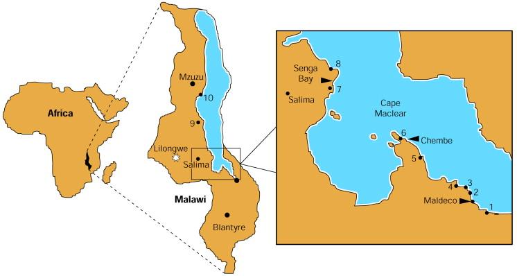 schistosomiasis lake malawi y8 viermi