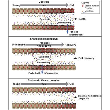 Locul probioticelor şi sinbioticelor în diareea asociată tratamentului cu antibiotice