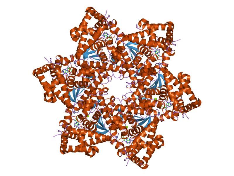 papilomavirus humano hpv genital