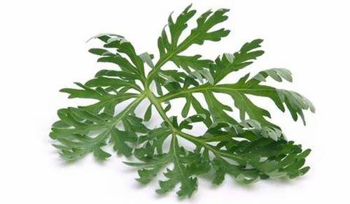 anthelmintic herbs anti oxiuri