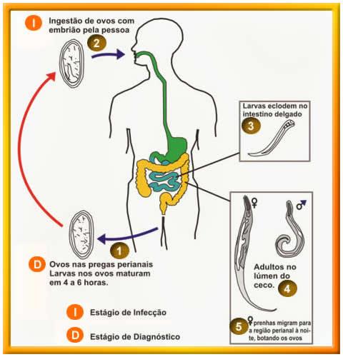 parazitii intestinali si alaptarea