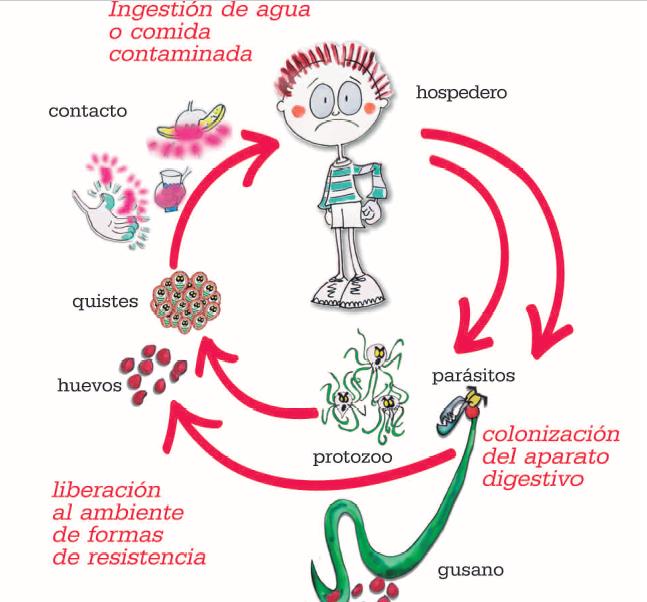 que enfermedad causan los oxiuros