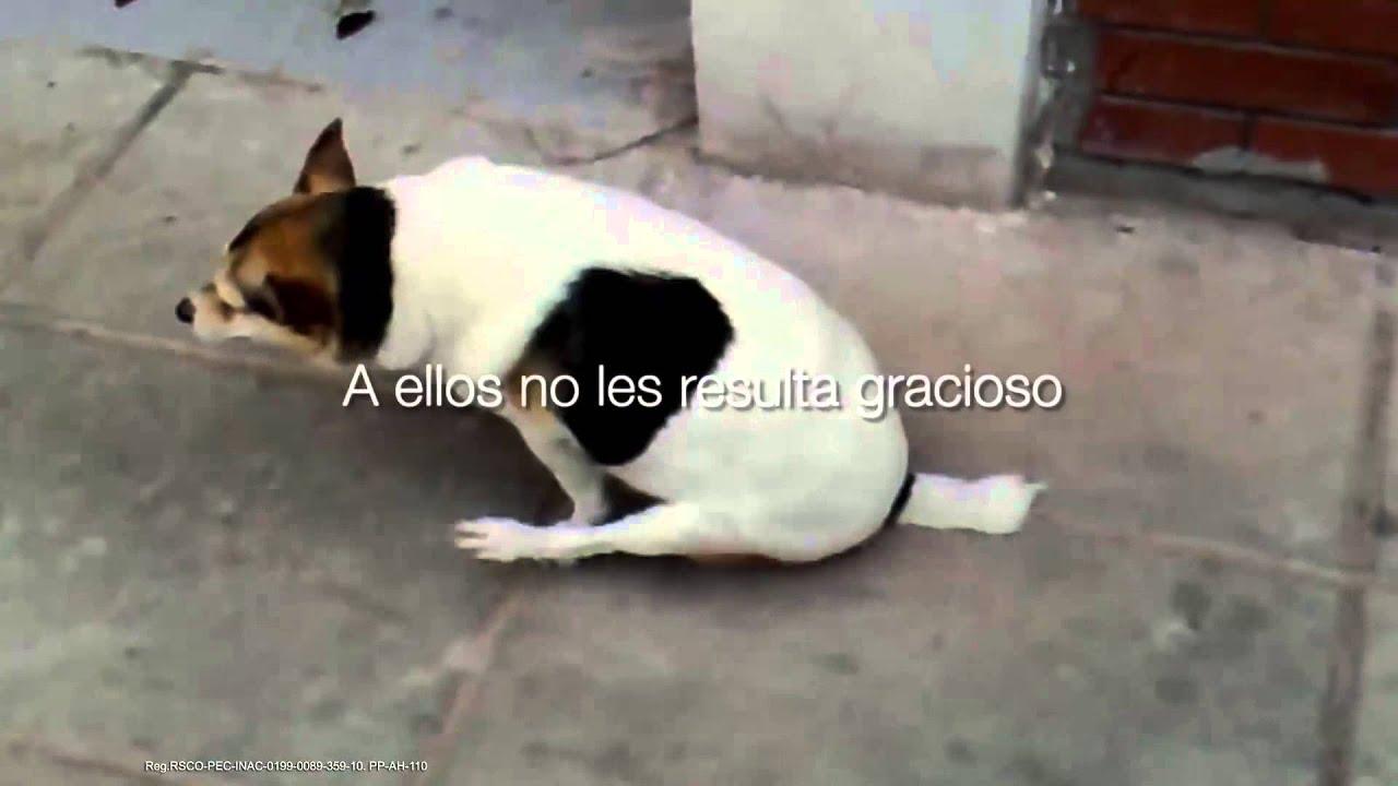 oxiuros en perros