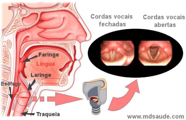 Simptomele mirosului de prostatita cronica