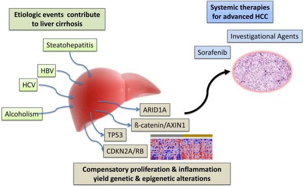 hepatocellular cancer meaning
