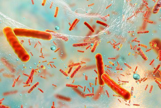 Viermisorii intestinali la copii, transmitere, simptome si tratament