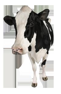papilomatosis bovina vacuna