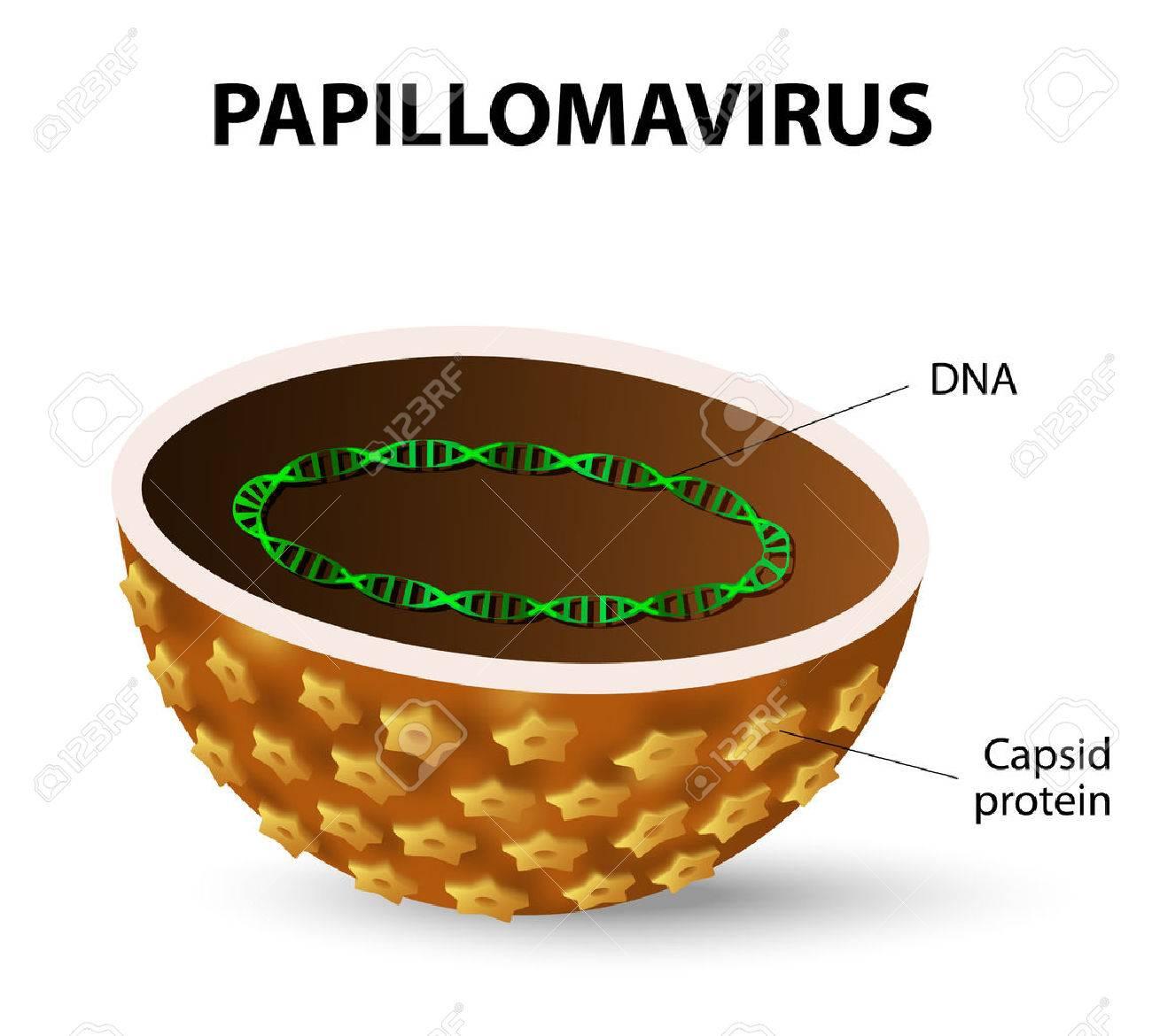 enterobius vermicularis terapija hpv no utero
