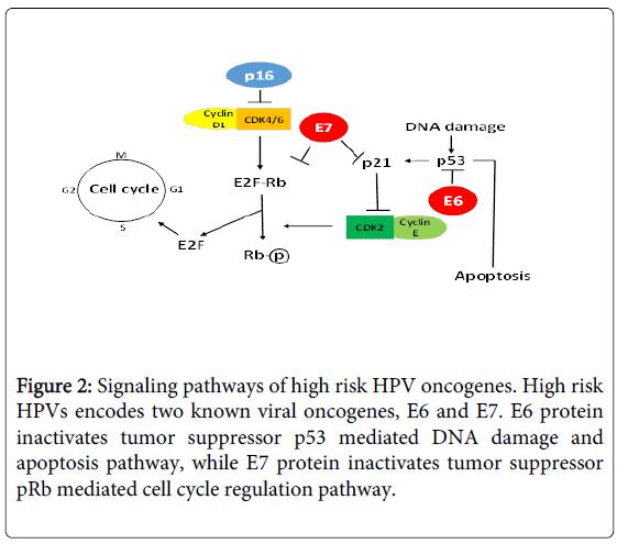 hpv und p16 papilloma virus si attacca con la saliva