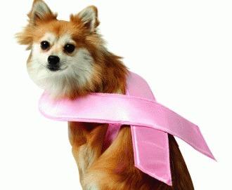 Abordarea diagnostică și terapeutică multimodală a tumorilor glandei mamare la carnivore