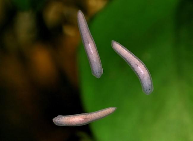 paraziti v akvariu na skle warts on hands and arms