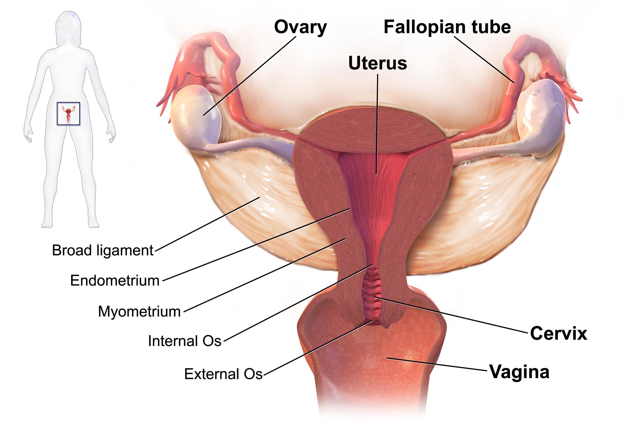 papillomavirus uterus symptoms