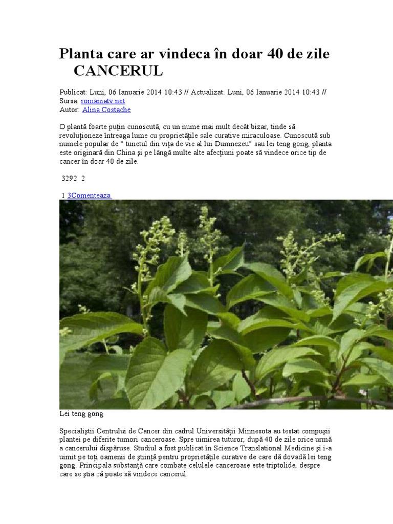 planta care vindeca cancerul program detoxifiere romania