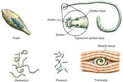 PITYRIASIS - Definiția și sinonimele pityriasis în dicționarul Engleză