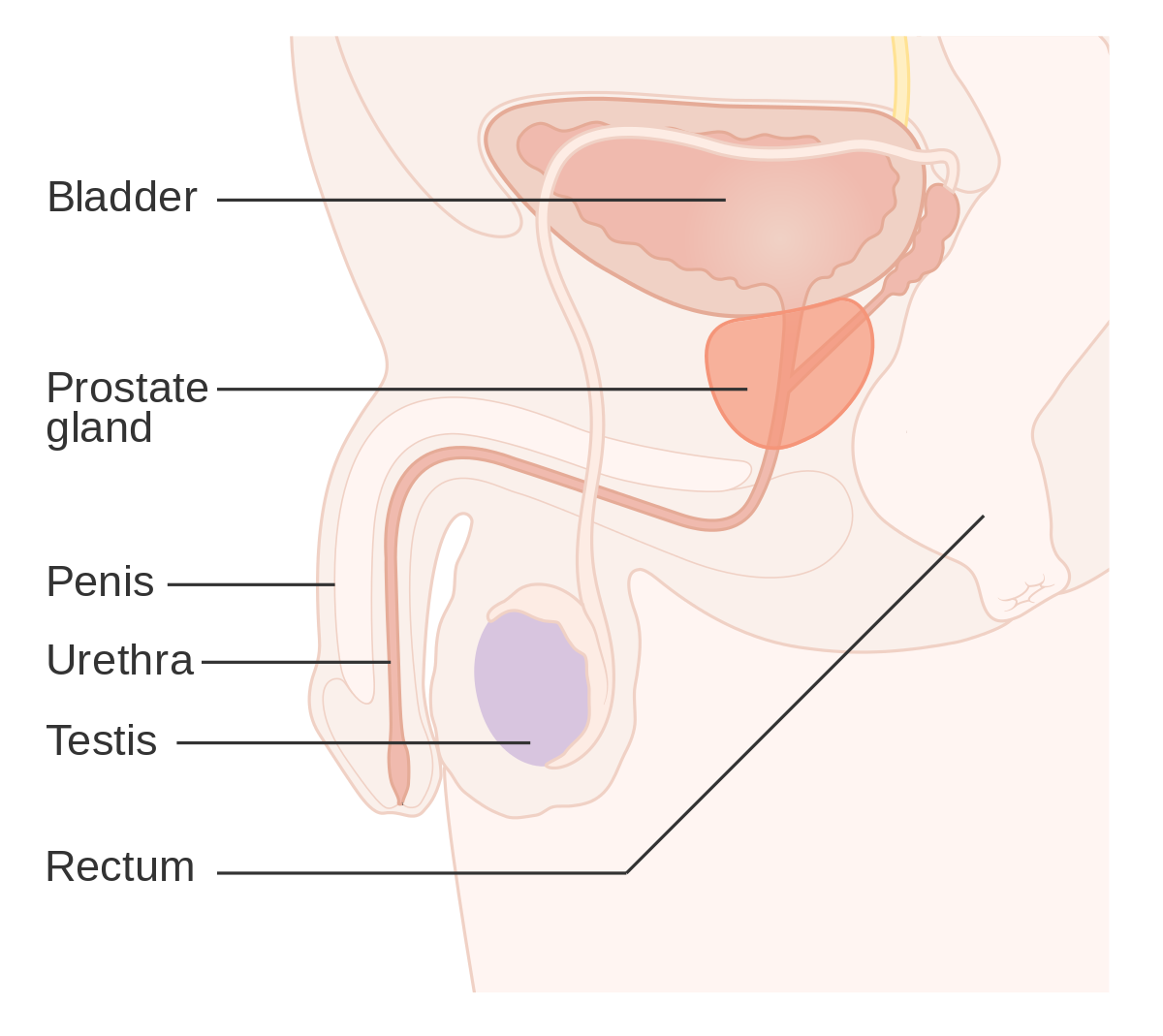 metastatic cancer de prostata