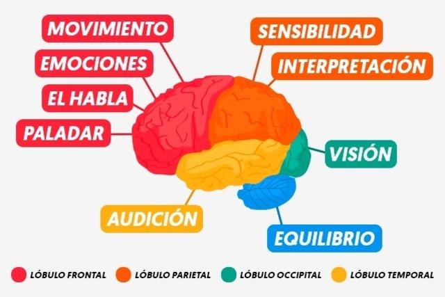 cancer cerebral sintomas