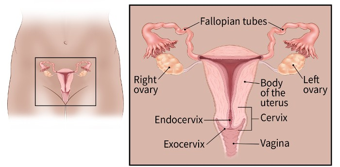 [Surgery in advanced cervical cancer].