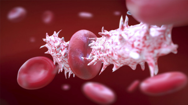 virus de papiloma humano quien lo transmite