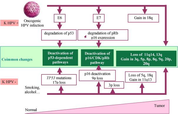 Tumors of the Cervix, Vagina, and Vulva