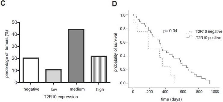 cancer de pancreas hipo classification of helminthic drugs
