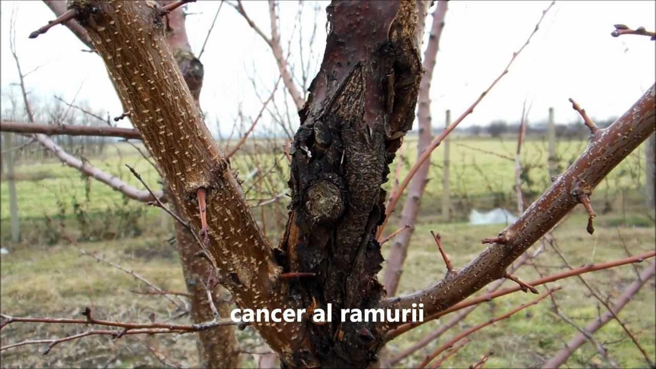 Stropirea pomilor fructiferi: când și cum se face - BASF Agricultural Solutions România