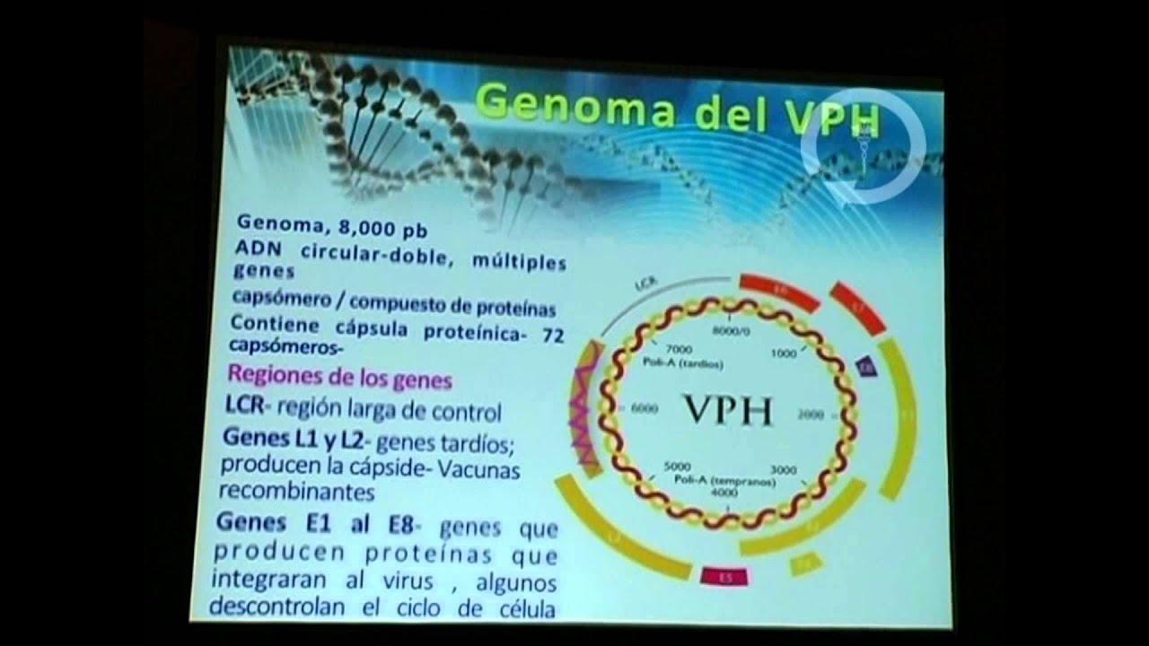 virus del papiloma por pcr