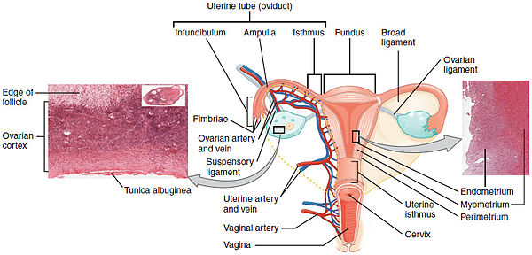cancer de col uterin metastaza simptome