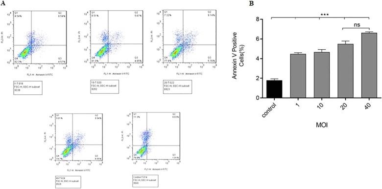 papillomavirus oncolytic virus human papillomavirus in females
