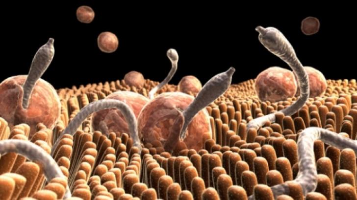 Viermi intestinali mari