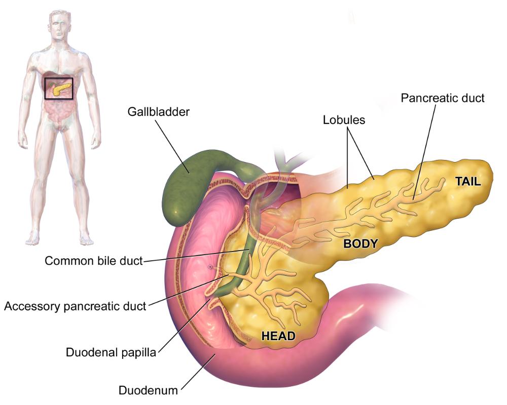 abdominal discomfort - Traducere în română - exemple în engleză | Reverso Context