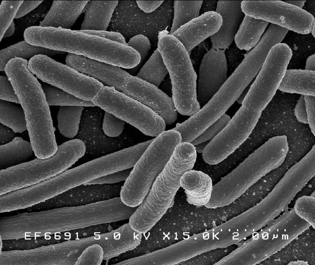"""Bacterii """"bune"""" vs. bacterii """"rele"""": biotehnologie pentru o piele sănătoasă - Mindcraft Stories"""