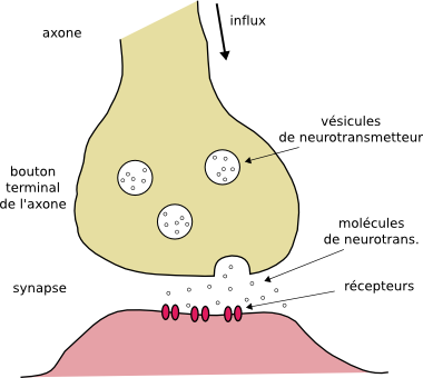 toxine musculaire)