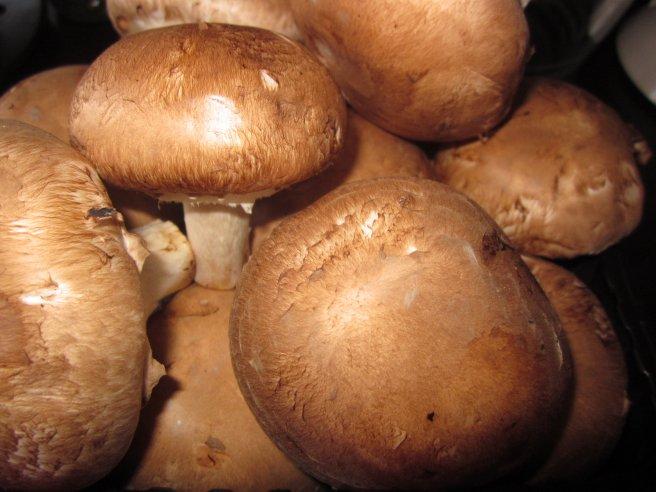 ciuperci brune