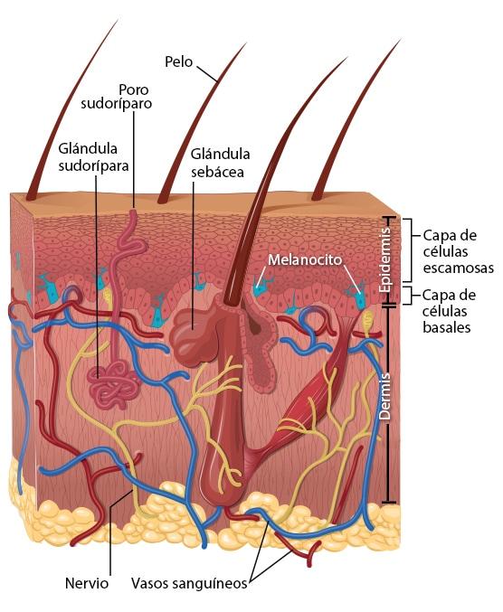 cancer epitelial de piel human papilloma virus korunma yollar?
