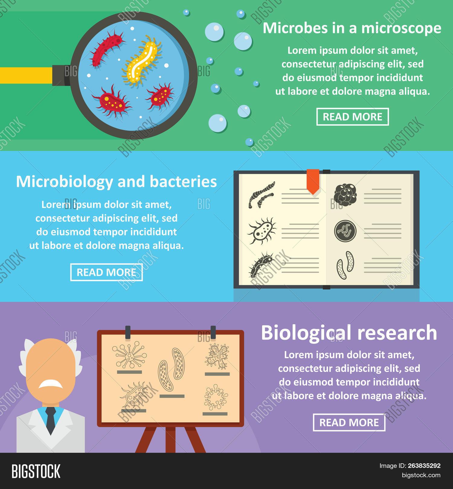 Care este diferenta dintre virusuri si bacterii