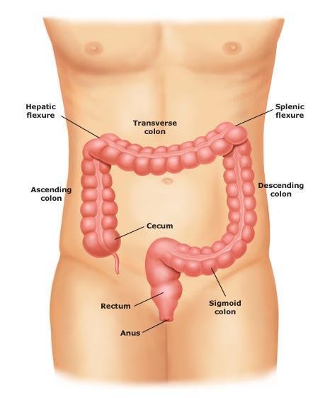 dezintoxicarea colonului cancer de pancreas hipo