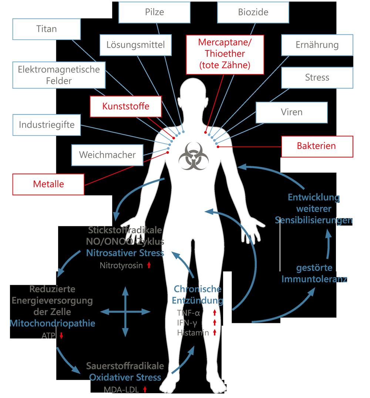 toxine zahnmedizin
