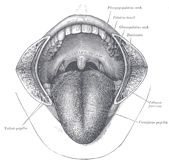 uvula papillom entfernen papiloma laringeo causas