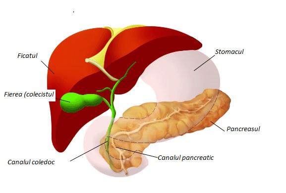 cancerul de pancreas doare