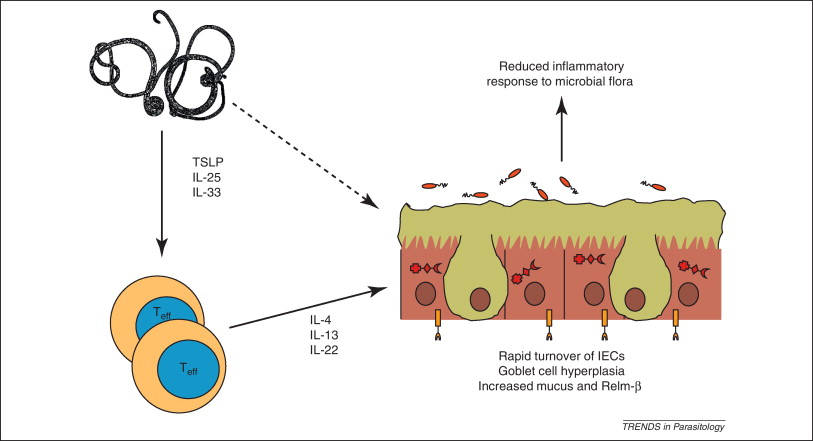helminth therapy (worms) for induction of remission in inflammatory bowel disease