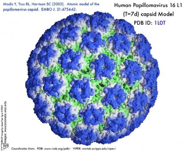 human papilloma viruses found metastatic cancer carcinoma