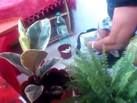 paraziti pentru flori)