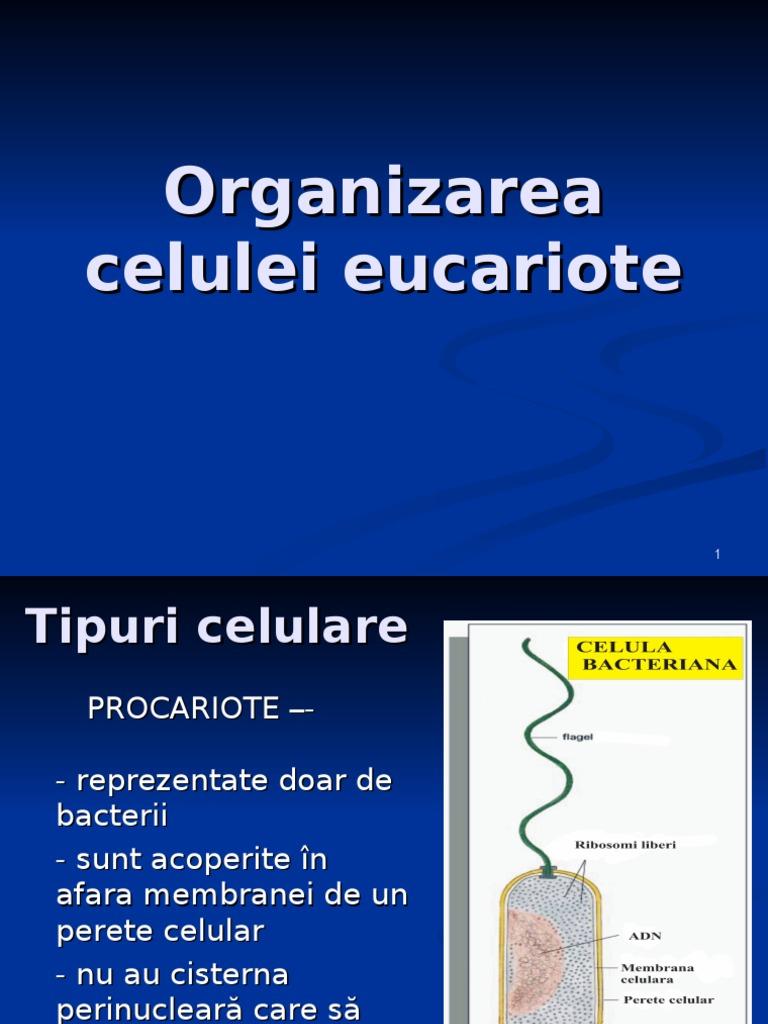 Procariote - Wikiwand