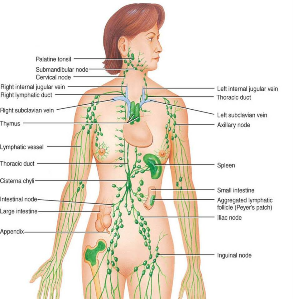 detoxifiere ganglioni limfatici