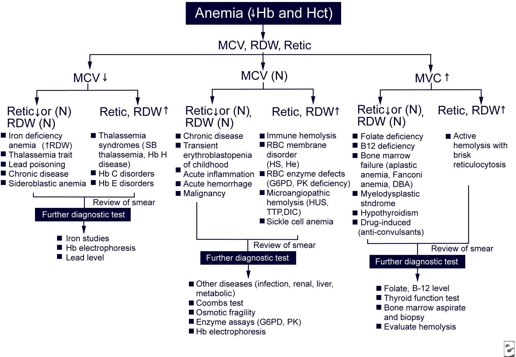anemia workup