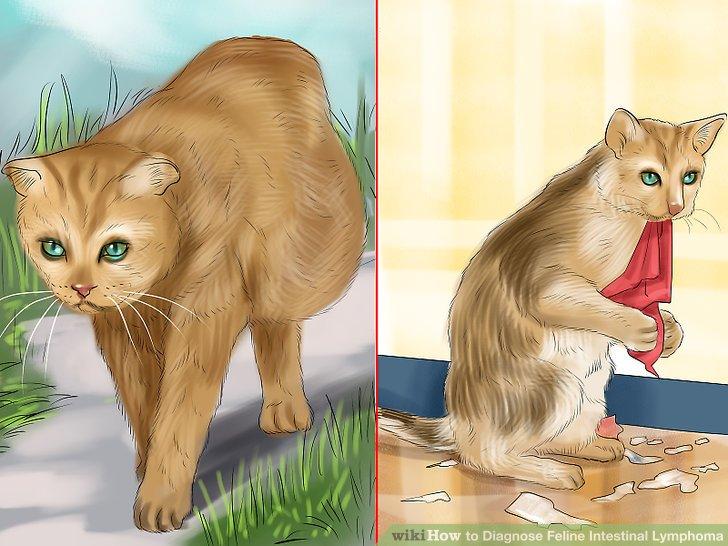 intestinal cancer feline