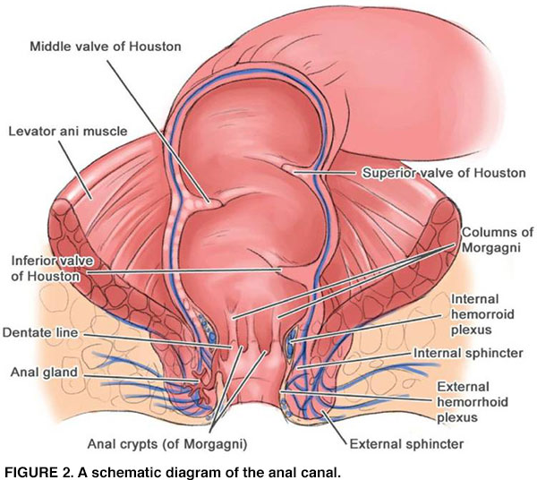 hpv anorectal