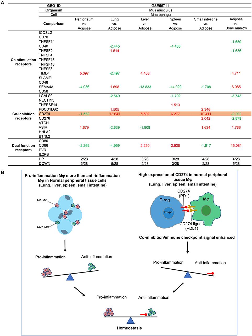 hpv oncogene temoignage