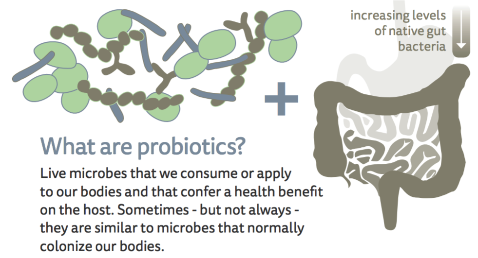 Vector Medicines with Probiotic Bacteria Realistic Vector 218839628